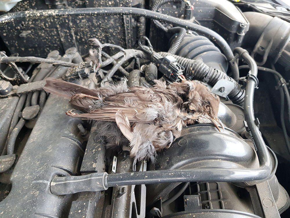 Marder Auto Schaden