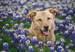 Frühkastration beim Hund