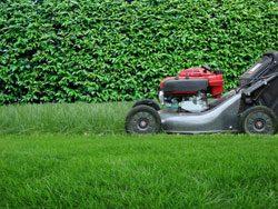 Rasen mähen ist die wichtigste Rasenpflegemaßnahme