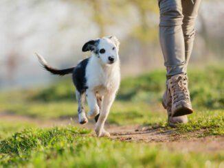 junghunde erziehen welpen