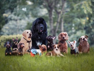 hunde rasse auswahl tipps