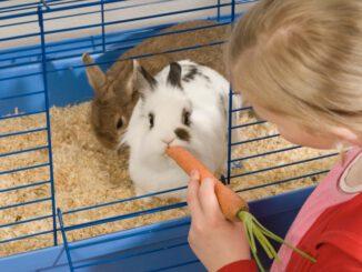 Kaninchen artgerecht käfig füttern