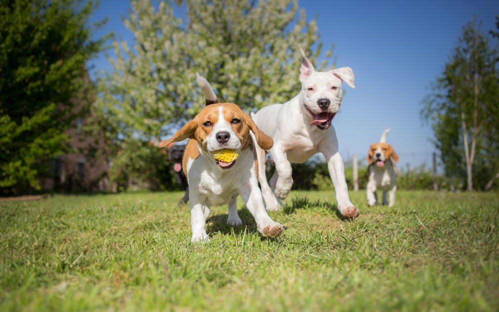 frühkastration vorteile nachteile hund