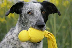 Fördern Sie die Talente Ihres Hundes