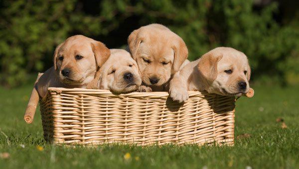 Bei einem Hundekauf sollten Sie bei manchen Anbietern die Finger von lassen