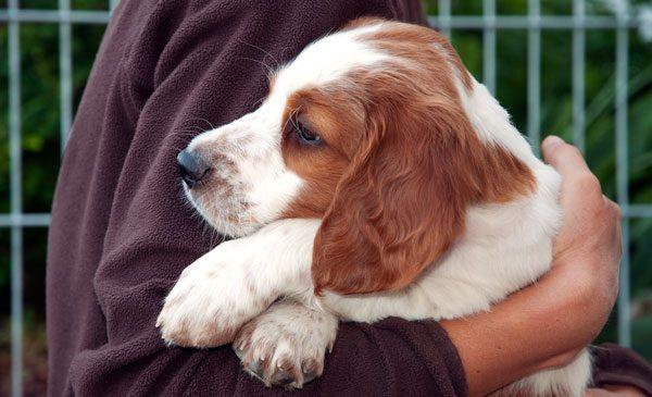 Im Tierheim finden Sie Hunde, die ein neues Zuhause suchen
