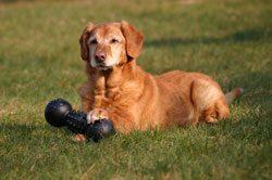Stimmen Sie das Spielzeug auf die Größe Ihres Hundes ab