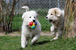 Spielzeug ist für Hunde wichtig