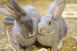 Kaninchen sollten immer zu zweit sein