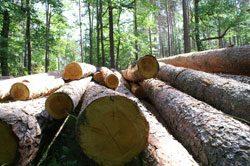 Holz wurde erst spät als Anlageobjekt erkannt
