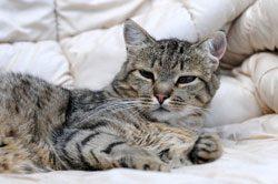 Katzen gehören zu den reinlichsten Haustieren