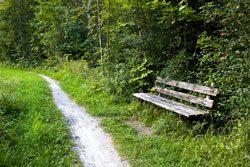 Zecken sitzen bevorzugt an Waldrändern