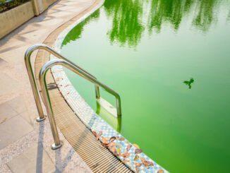 algen pool reinigen