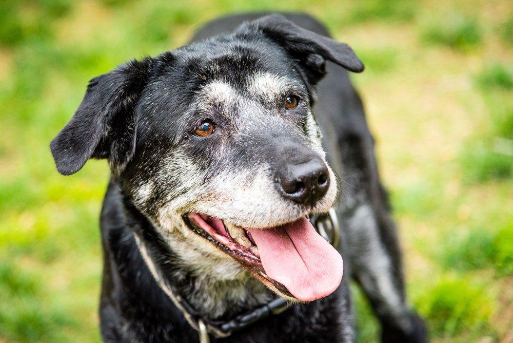 alter hund krankheiten leben