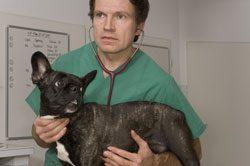 Viele Herzerkrankungen beim Hund sind tückisch