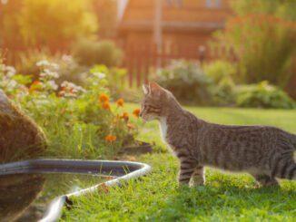 katzen vertreiben tipps