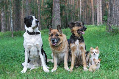 Betroffen sind sowohl große als auch kleine Hunderassen