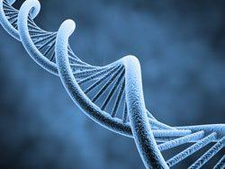 Genetik ist ein weites Feld