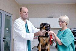 Gehen Sie immer zum Tierarzt
