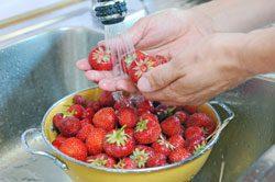 Erdbeeren waschen - Danach sind sie bereit für den Verzehr