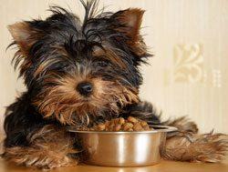 Gutes Nassfutter für Hunde besteht aus einer festen Fleischmasse