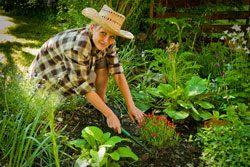 Gartenarbeit im August - Es gibt einiges zu erledigen