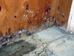 Feuchtigkeit im Keller kann zu Schimmel und muffigen Geruch führen