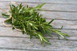 Kräutergarten anlegen - Genießen Sie Ihre eigenen frischen Kräuter
