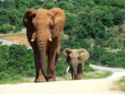 Es gibt sehr viele Nationalparks in Kenia