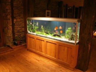 aquarium einrichten tipps planung
