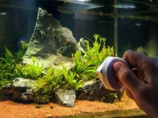 aquarium algen reinigen entfernen tipps