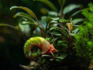 aquarium schnecken tipps entfernen