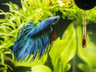 aquarium kühlen aufheizen tipps