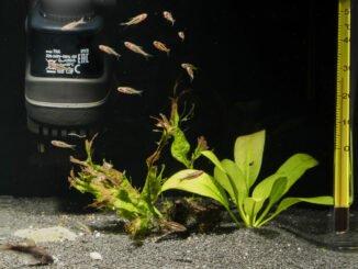aquarium filter reinigung tipps