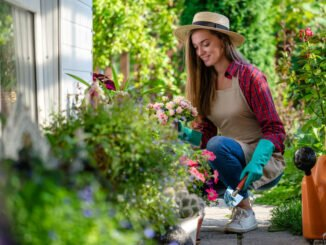 gartenarbeit september tipps obstgarten