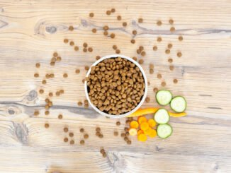 hundefutter trockenfutter tipps inhaltsstoffe