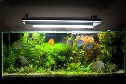 Algen im Aquarium entfernen - Beleuchtung muss optimal gewählt werden