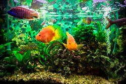 Aquarium einrichten - Entspannungsoase schaffen