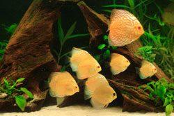 Aquarium FIlter reinigen um dauerhaft sauberes Wasser zu haben