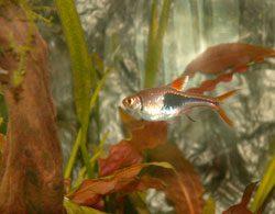 Pflanzen im Aquarium werden braun - Finden Sie die Ursache