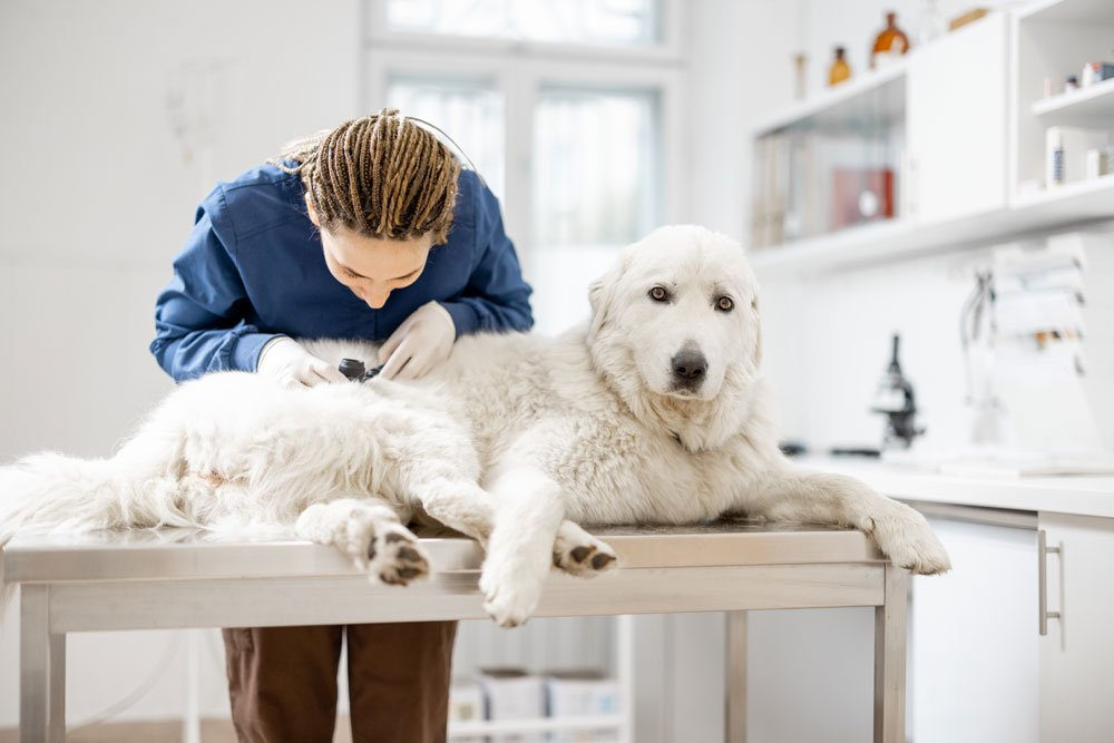 hautkrankheiten hund symptome