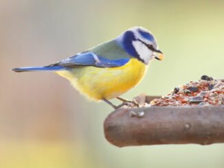 vögel füttern tipps