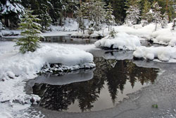Fische im Teich müssen gut über den Winter gebracht werden