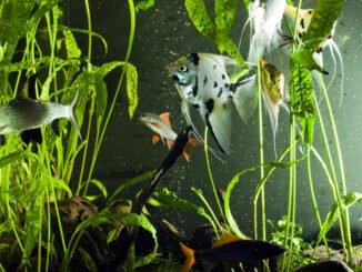 aquariumfilter bauen anleitung tipps