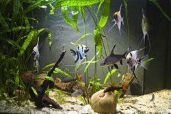 Aquarium Filter selber bauen - Schritt für Schritt Anleitung