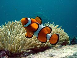Aquarium Rückwand selber bauen - So geht's