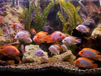 aquariumrückwand selber tipps anleitung