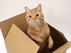 Katzen hängen an Ihrer Umgebung