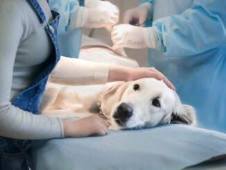 hund krankheiten bakterien