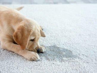 teppich geruch reinigung tipps